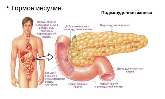 Что такое инсулин