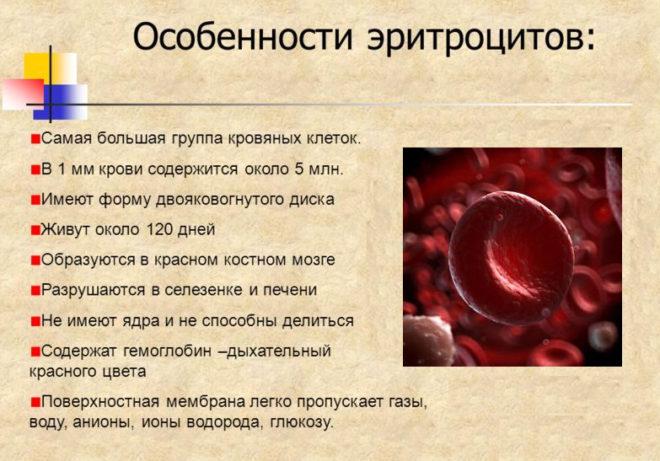 эритроциты повышены