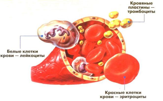 тромбоцитов