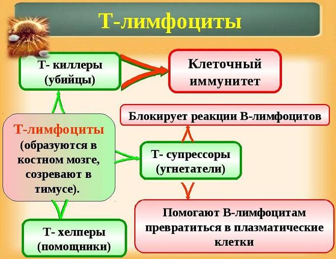 защита организма от инфекций