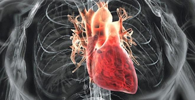 как выглядет сердце