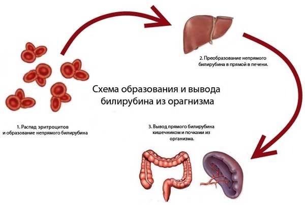 билирубин