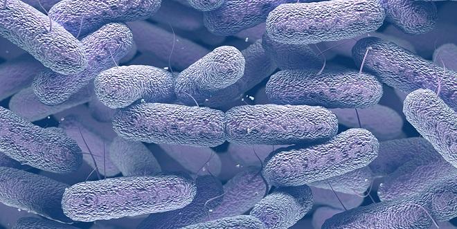 Клебсиелла (klebsiella pneumoniae)
