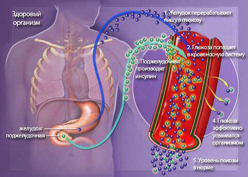 Схема поддержки уровня сахара в крови