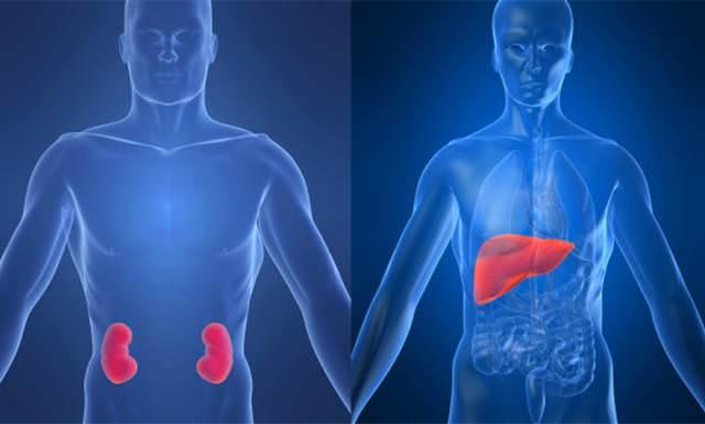 Заболевания печени и почек