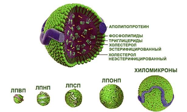 Липопротеин А
