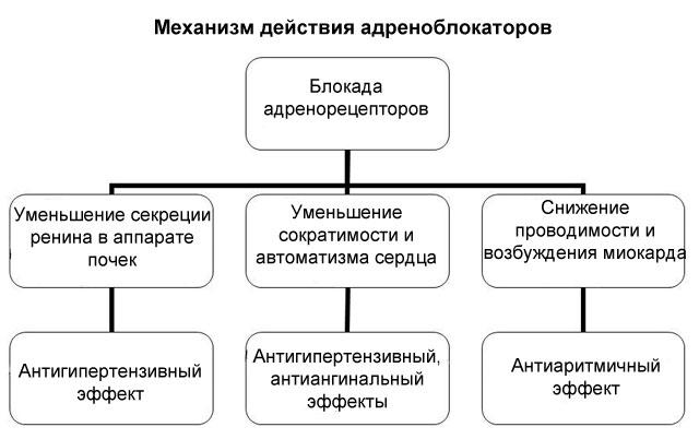 Альфа-адреноблокаторы: механизм действия