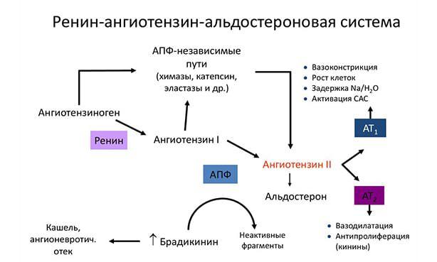 Ренин-ангиотензин-альдостероновая система