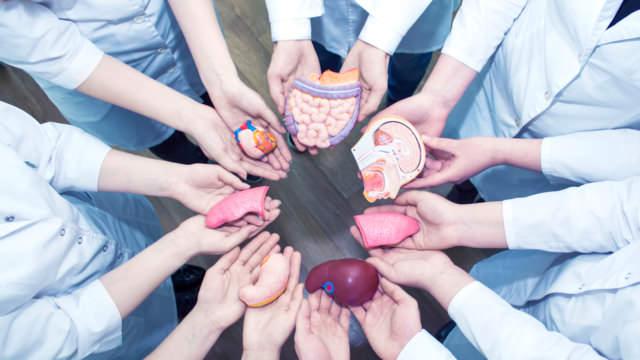 Основные стадии ХПН по креатинину: как определить и лечить болезнь?