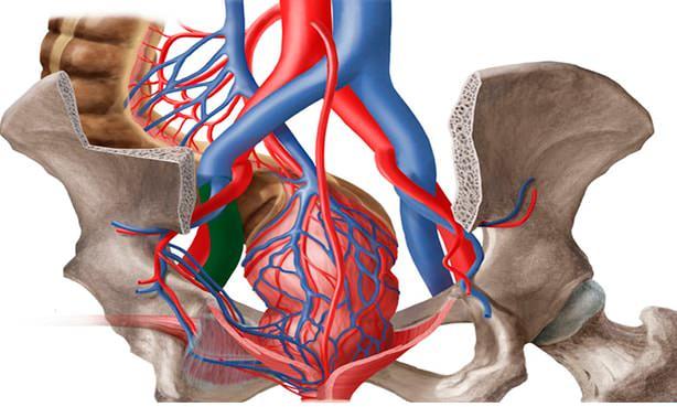 Изображение артерий и вен малого таза